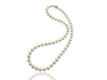 Pearls Necklace. White Pearls Collier on white background Royalty Free Stock Photos