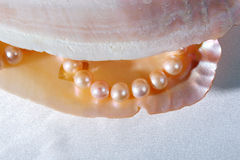 Pearls necklace  in shell Stock Photo