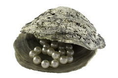 Pearls in Oyster Shell. Pearl necklace nestled inside an open oyster shell Stock Image