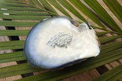 Pearls in an oyster shell - South Pacific. Display of pearls in an oyster shell in French Polynesia in the South Pacific Ocean Stock Photos