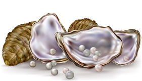 Pearls in the oysters on a white Stock Photography