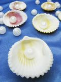 Pearls in sea shells on blue background Stock Images