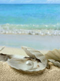 Pearls in seashell. The pearls in seashell on the beach Royalty Free Stock Images