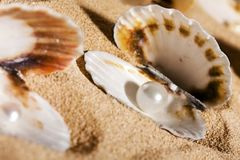 Pearls in the seashells Stock Photography