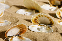 Pearls in the seashells Royalty Free Stock Photo