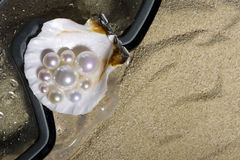 Pearls on the shell Stock Photos