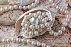 Pearls in a shell Royalty Free Stock Photo