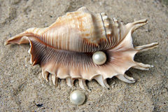 Pearls and shell Royalty Free Stock Photography