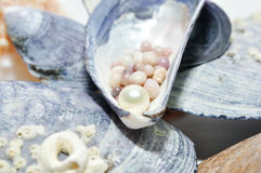 Pearls in a shell Stock Image