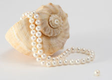 Pearls and shell. Conch shell with string of pearls coming from the shell Royalty Free Stock Image