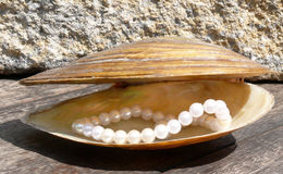 Pearls and shell Royalty Free Stock Photo