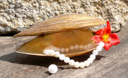 Pearls and shell Royalty Free Stock Photos