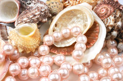 Pearls and shells. Pear necklace and shells close-up on white Stock Photo