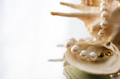 Pearls and shells Stock Images
