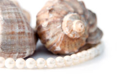 Pearls and shells Royalty Free Stock Photo