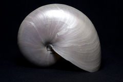 Pearly Nautilus Stock Photography