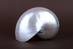 Pearly Nautilus Sea Shell upright Stock Images
