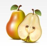 pears vektor illustrationer
