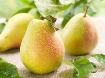 Pears Royalty Free Stock Photos