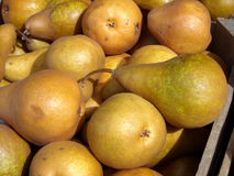Pears. Organic pears displayed at the Union Square Farmers Market, New York City royalty free stock photo