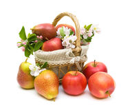 Pears and apples in a basket on a white background Royalty Free Stock Images
