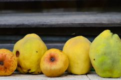 Pears , apples and quince Royalty Free Stock Photos