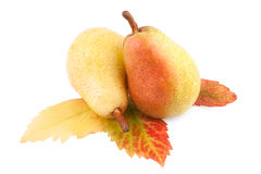 Pears with Autumn Leaf isolated Royalty Free Stock Photography