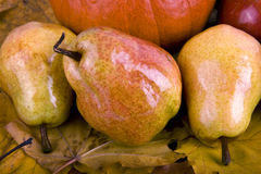 Pears on the autumn leaves Stock Photography