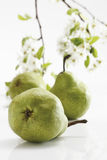 Pears and blossoms Royalty Free Stock Images