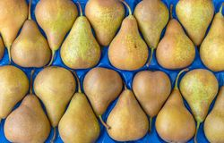 Pears on a blue background. Fresh, yellow pears on a blue background stock image