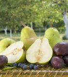 Pears with blueberries and plums Stock Photo