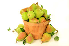 Pears in Bushel Stock Photo