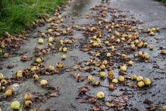 Pears fallen down Stock Photos