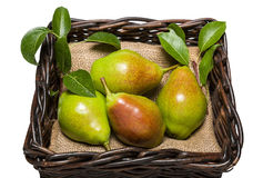 Pears. Freshly harvested pears in wicker basket Royalty Free Stock Photo
