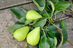Pears freshly picked Royalty Free Stock Photo