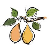 Pears fruit Stock Photography