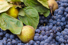 Pears, grapes and green leaves background Royalty Free Stock Photo
