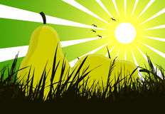 Pears on grass Stock Photo