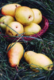 Pears on the grass Stock Photography