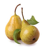 Pears with green leaves. Wo pears with green leaves stock photos