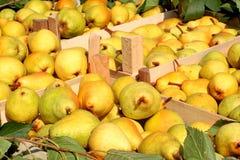 Pears i spjällådor Arkivfoton