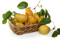 Pears-juicy and fragrant crop of 2015 in a basket Royalty Free Stock Photo
