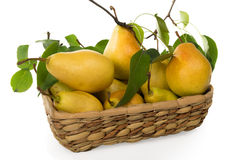 Pears-juicy and fragrant crop of 2015 in a basket Stock Images