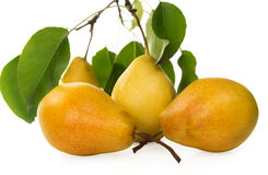 Pears-juicy and fragrant crop of 2015. Stock Photography