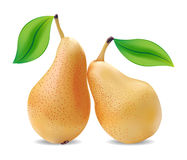 Pears and leaves Stock Image