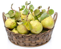 Pears with leaves in a basket Stock Image