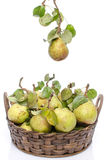 Pears with leaves in a basket Stock Images