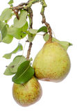Pears with leaves Royalty Free Stock Photography