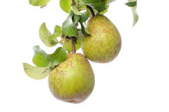 Pears with leaves Royalty Free Stock Image