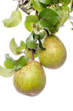 Pears with leaves Royalty Free Stock Images